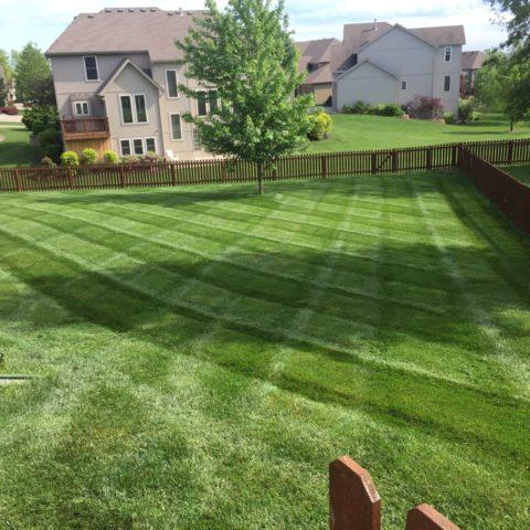 lawn4